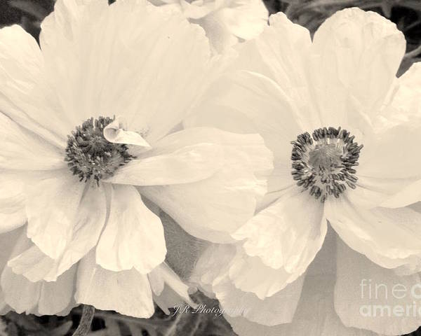 Poppies In Monochrome Poster featuring the photograph Poppies In Monochrome by Jeannie Rhode