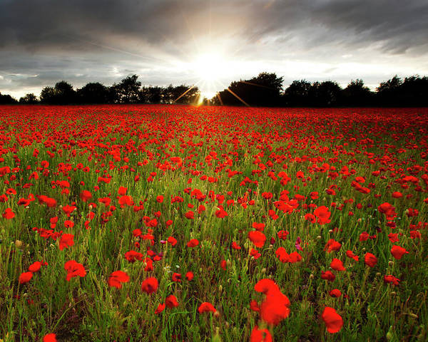 Horizontal Poster featuring the photograph Poppy Field At Sunset by Doug Chinnery
