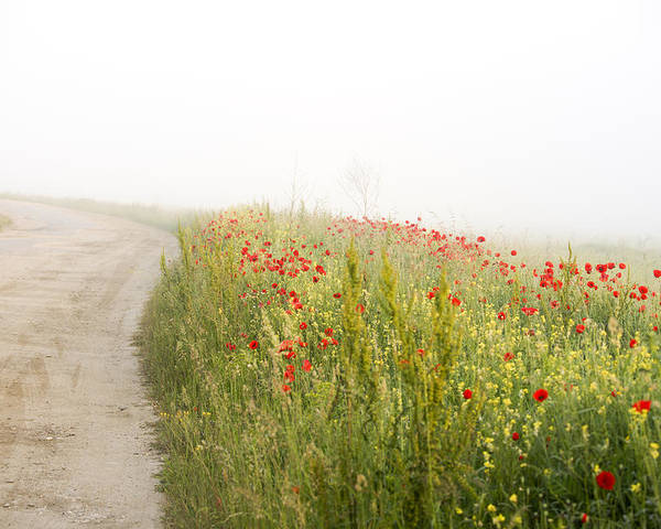 Agriculture Poster featuring the photograph Poppy flower guarding the road by Adrian Bud
