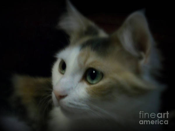Cat Poster featuring the photograph Portrait Of Miss Kitty by Emily Kelley