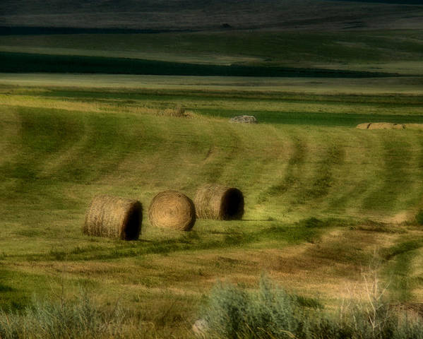 Hay Poster featuring the photograph Prairie Grace by Tingy Wende