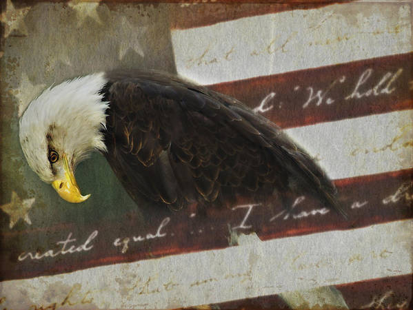 Eagle Poster featuring the photograph Praying For Our Country by Kathy Jennings