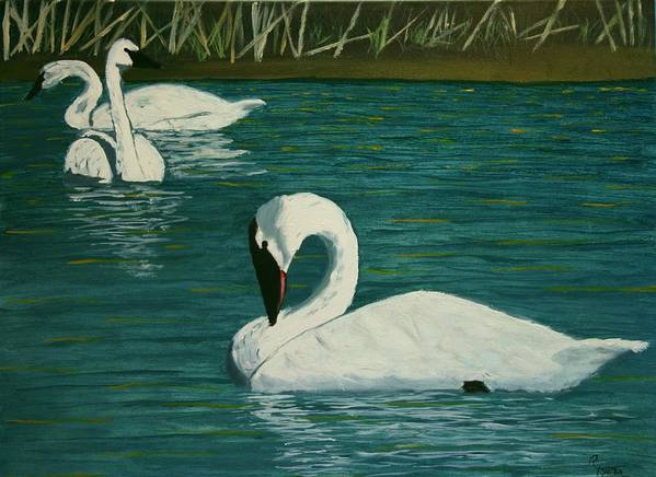 Swans Poster featuring the painting Preening Swans by Robert Tower