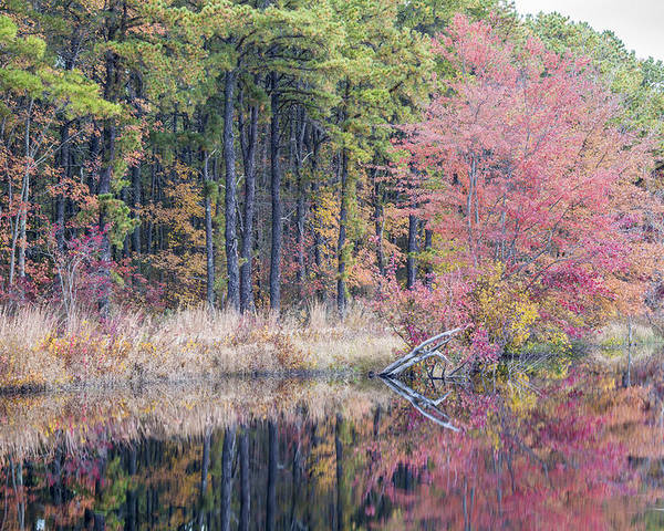 Fall Foliage Poster featuring the photograph Pretty In Pink by Charles Aitken