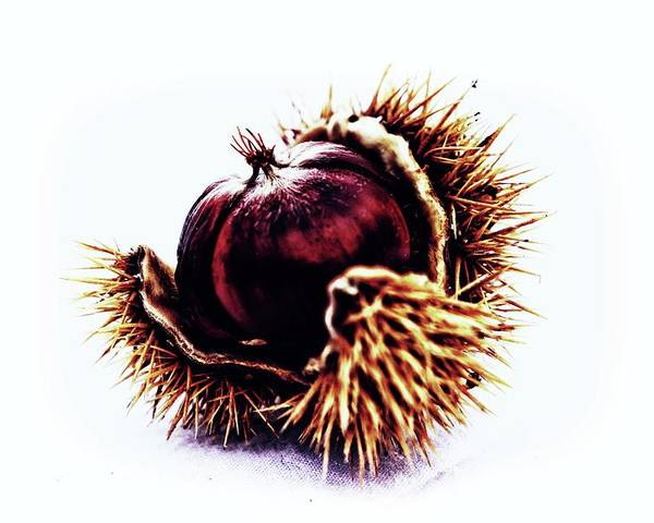 Color Poster featuring the photograph Prickly Little Bitch by Karen Stahlros