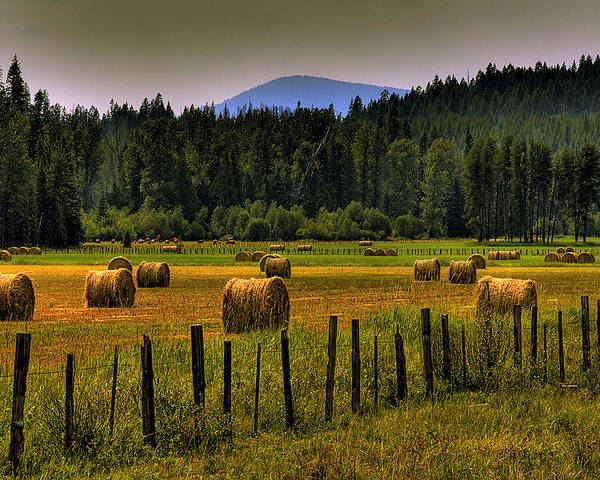 Priest Lake Poster featuring the photograph Priest Lake Hay Bales II by David Patterson