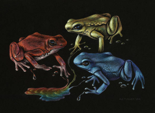 Frog Poster featuring the drawing Primary Poison by Amy S Turner