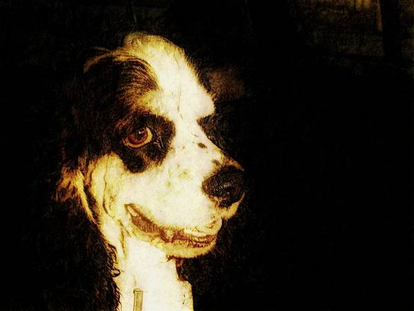 Dog Poster featuring the photograph Profile Of A Cocker by Rosemary McGahey