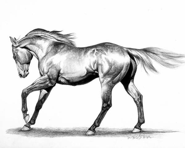 Thoroughbred Poster featuring the drawing Proud by Howard Dubois