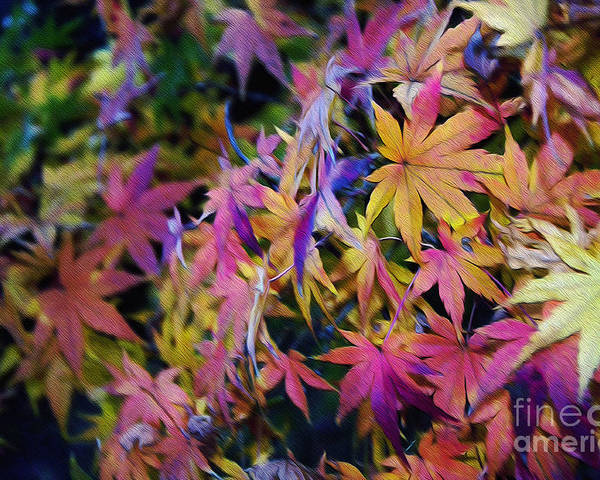 Photography Poster featuring the photograph Psychedelic Maple by Kaye Menner