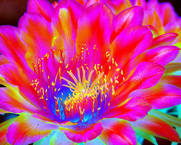 Flower Poster featuring the photograph Psychedelic Pink Flower by Richard Henne