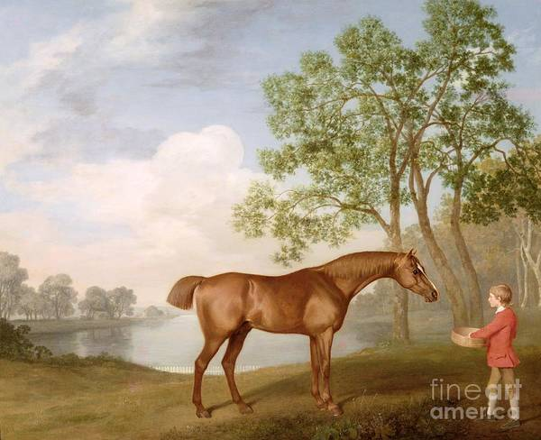 Pumpkin Poster featuring the painting Pumpkin With A Stable-lad by George Stubbs