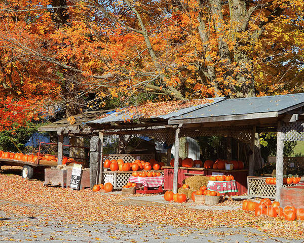 Shed Poster featuring the photograph Pumpkins For Sale by Louise Heusinkveld