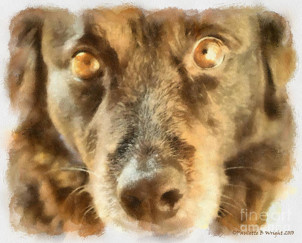 Dog Poster featuring the photograph Puppy Eyes by Paulette B Wright