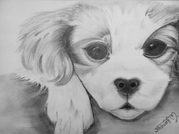 Poster featuring the drawing Puppy Sketch by Anirudh Maheshwari