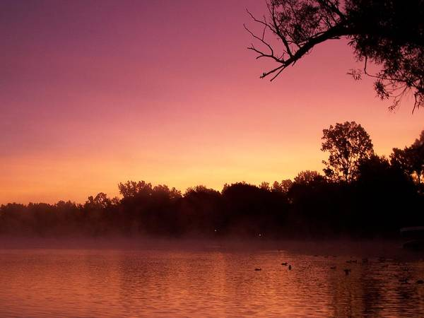 Dawn Poster featuring the photograph Purple Dawn by Stacey Highfield