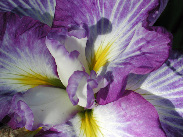 Flower Poster featuring the photograph Purple Flower 2 by Holly Wolfe