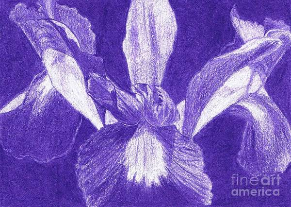 Floral Poster featuring the drawing Purple Iris by Jeanne Stumbaugh