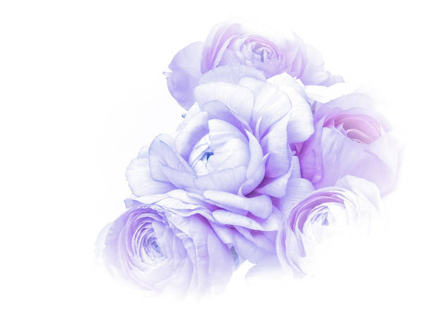 High Contrast Poster featuring the photograph Purple Ranunculus by Susan Westervelt
