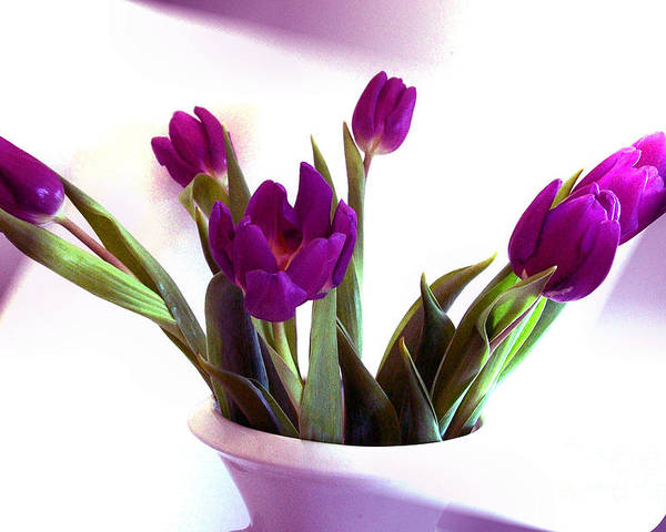 Photo Poster featuring the photograph Purple Tulips by Marsha Heiken