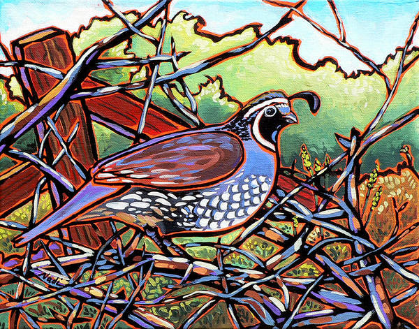Quail Poster featuring the painting Quail by Nadi Spencer
