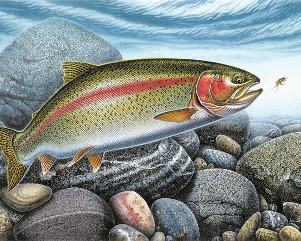 Rainbow Trout Poster featuring the painting Rainbow Trout Stream by JQ Licensing