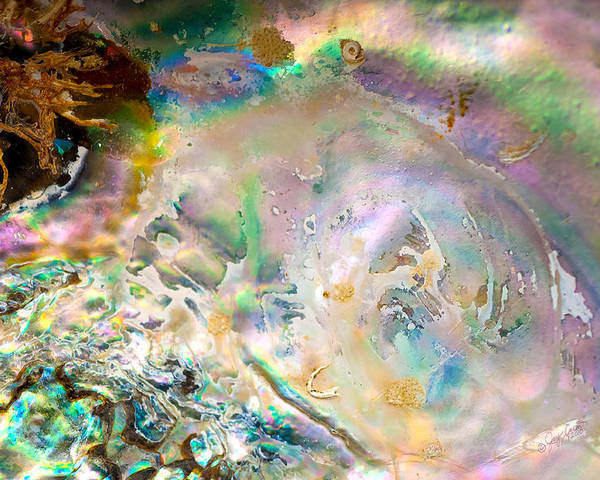 Abalone Poster featuring the photograph Rainbows And Seaweed by Joy Gerow