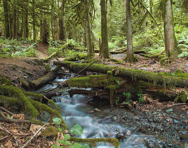 Stream Poster featuring the photograph Rainforest At Bridal Veil Falls - British Columbia by Linda McRae