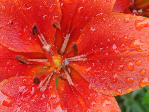 Nature Photography Poster featuring the photograph Rainy Morning by Lisa Toms