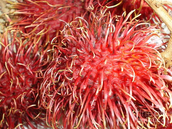 Fruit Close Up Poster featuring the photograph Rambutan by Chandelle Hazen