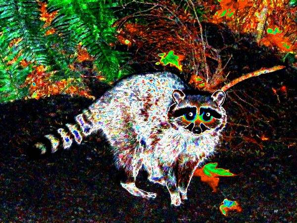 Raccoon Poster featuring the photograph Rascally Raccoon by Will Borden