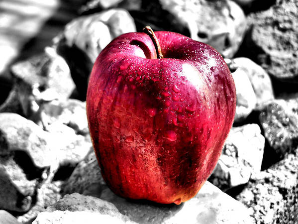 Red Apple Poster featuring the photograph Red Apple by Karen Scovill
