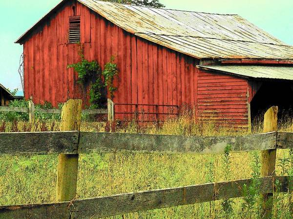 Barn Poster featuring the photograph Red Barn With Vines by Michael L Kimble