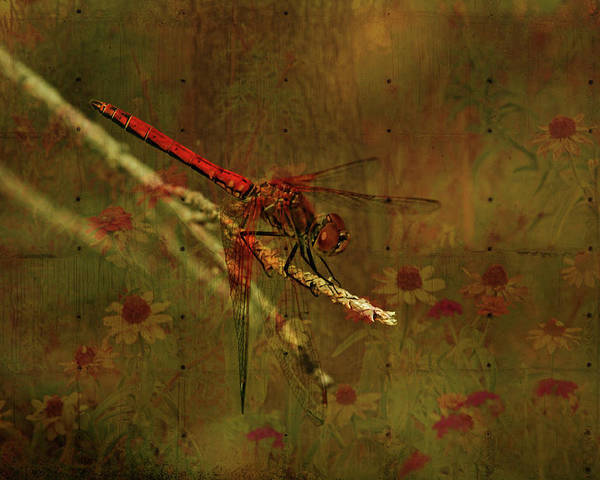 Red Dragonfly Poster featuring the photograph Red Dragonfly Dining by Bonnie Bruno