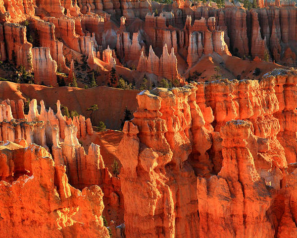 Bryce Poster featuring the photograph Red Glow On Hoodoos Of Bryce Canyon by Pierre Leclerc Photography