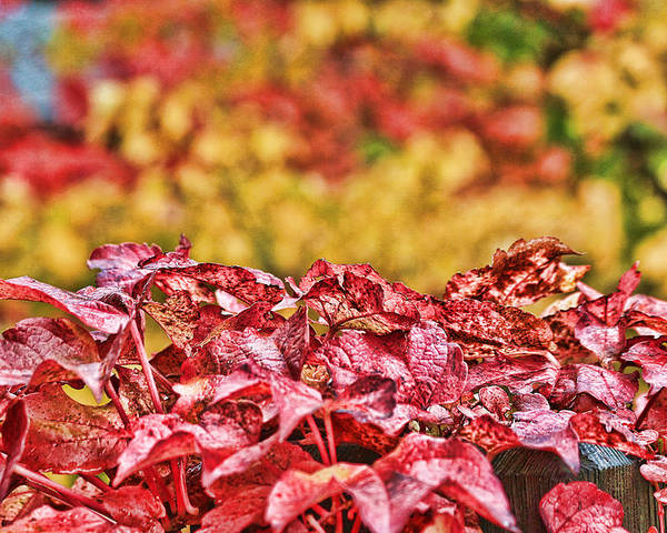 Photograph Poster featuring the photograph Red Leaves by Sergey and Svetlana Nassyrov