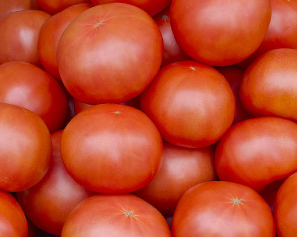 Fruit Poster featuring the photograph Red Ripe Tomatoes by John Trax