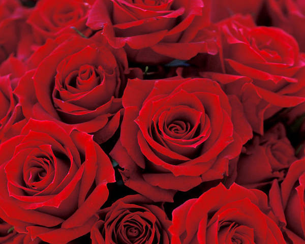 Red Roses Poster featuring the photograph Red Rose Bouquet by Kathy Yates