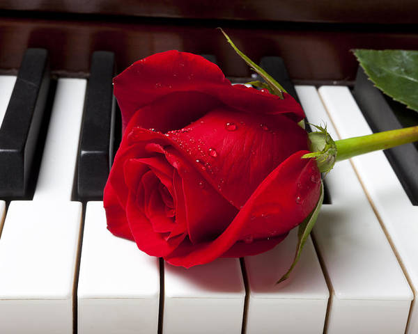 Red Rose Roses Poster featuring the photograph Red Rose On Piano Keys by Garry Gay