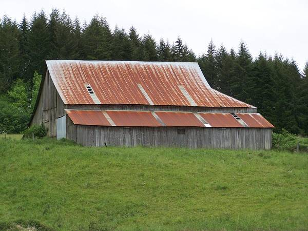 Barn Poster featuring the photograph Red Rusty Tin Roofed Old Barn Washington State by Laurie Kidd