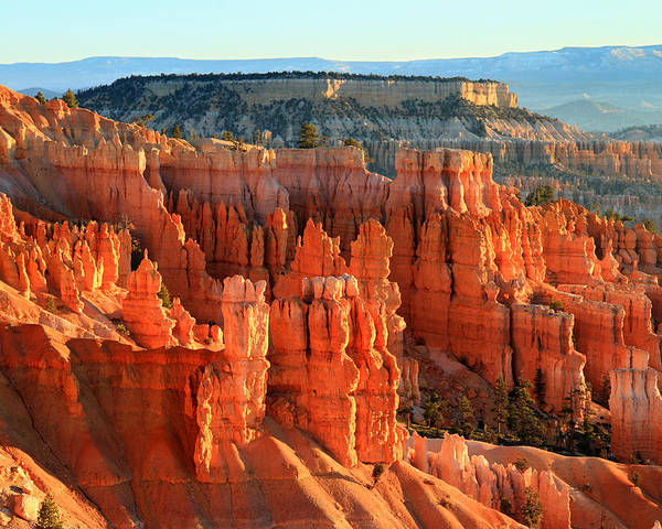 Bryce Poster featuring the photograph Red Sunrise Glow On The Hoodoos Of Bryce Canyon by Pierre Leclerc Photography