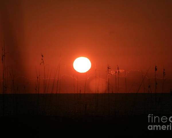 Sunset Poster featuring the photograph Red Sunset And Grasses by Nadine Rippelmeyer