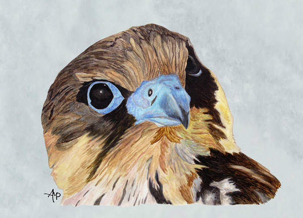Red-tailed Hawk Poster featuring the painting Red-tailed Hawk Portrait by Angeles M Pomata