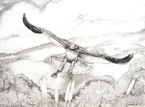 Red-tailed Hawk Poster featuring the drawing Red-tailed Hawk Of Psalm 104 by Jill Iversen