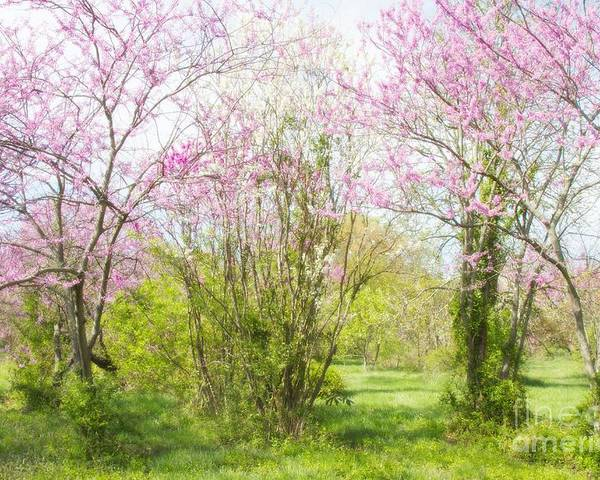 Redbud Trees Poster featuring the photograph Redbud Trees 4 by Chris Scroggins