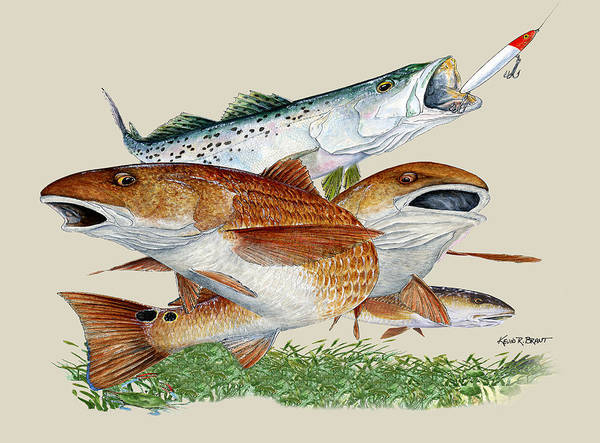 Redfish Poster featuring the painting Reds And Trout by Kevin Brant