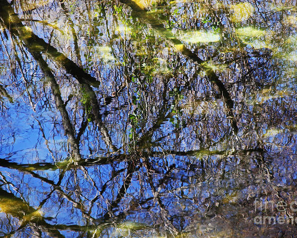 Reflections Poster featuring the photograph Reflections In A Pond by David Frederick
