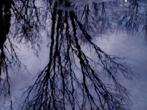 Water Poster featuring the photograph Reflections In Pond by Susan Grissom