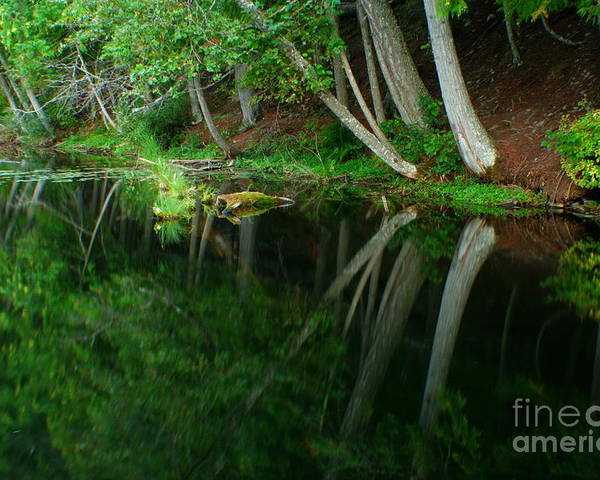 Forest Poster featuring the photograph Reflections Of A Forest by Idaho Scenic Images Linda Lantzy