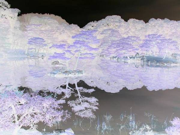 Reflection Poster featuring the photograph Reflections On A Surreal Pond by Curtis Schauer